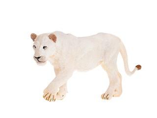 Белая львица