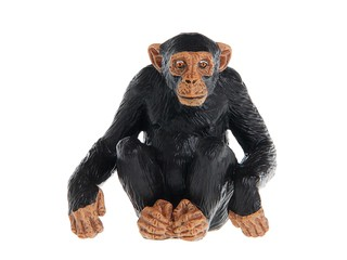 Шимпанзе. Вид 1