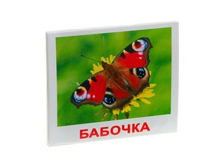 Набор обучающих карточек насекомые. Вид 1