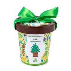 Набор для выращивания Happy Plant Ель необыкновенная