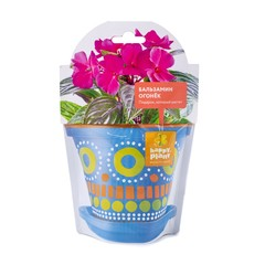 Набор для выращивания Happy Plant Бальзамин огонек
