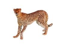 Гепард. Вид 2
