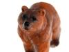 Бурый медведь. Вид 4