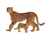 Гепард с детенышом. Вид 1