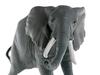 Африканский слон. Вид 4