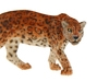 Ягуар. Вид 2