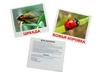Набор обучающих карточек насекомые. Вид 3