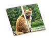 Картинки-половинки дом животные. Вид 3
